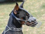 Doberman Basket Muzzle - Cage Wire Dog Muzzle For Doberman