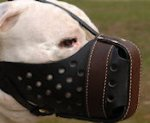PitBull Training Dog Muzzle