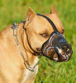 Designer Leather dog muzzle for American Pit bull terrier