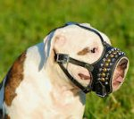 Royal Pyramids studded Leather Dog Muzzle for American Bulldog