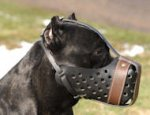 Cane Corso Training Dog Muzzle