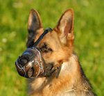 German Shepherd art designer Leather dog muzzle