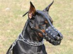 Everyday Lightweight Roya Leatherl Dog Muzzle