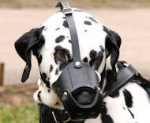 New Zealand Leather Dog Muzzle For Dalmatian