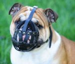 Dog Muzzle Stress Free For British Bulldog