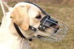 Labrador Retriever Basket Muzzle - Cage Wire Dog Muzzle For Labrador Retriever