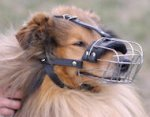 Collie Basket Muzzle - Cage Wire Dog Muzzle For Collie