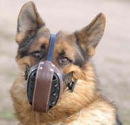 German shepherd dog muzzle