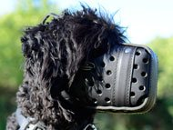 black-russian-terrier-muzzles