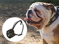 english-bulldog-muzzles