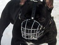 french-bulldog-muzzles