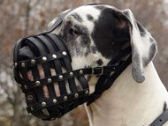 great-dane-muzzles