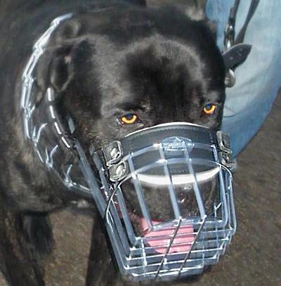 Mastiff Wire Dog Muzzle
