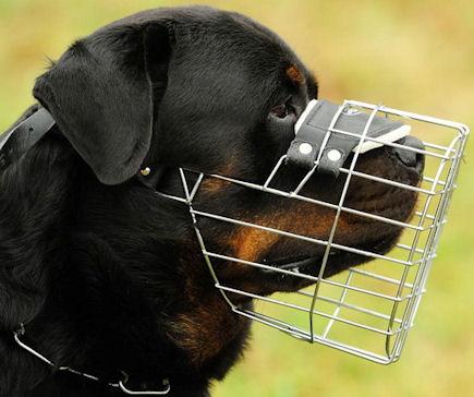 Rottweiler Wire Dog Muzzle, Rottweiler Basket Dog Muzzle -PADDED