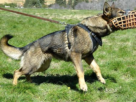 training dog muzzle - leather basket dog muzzle