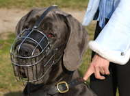 Great dane dog muzzle