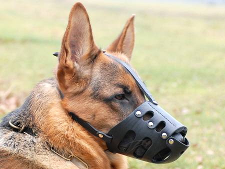Everyday German Shepherd Leather dog muzzle-gsd muzzle