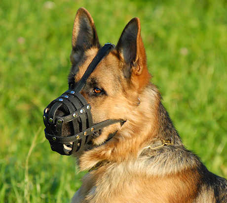 Leather dog muzzle for German shepherd