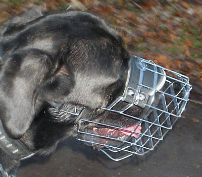 Mastiff Dog Wire Muzzle-Cage Basket Dog Muzzle