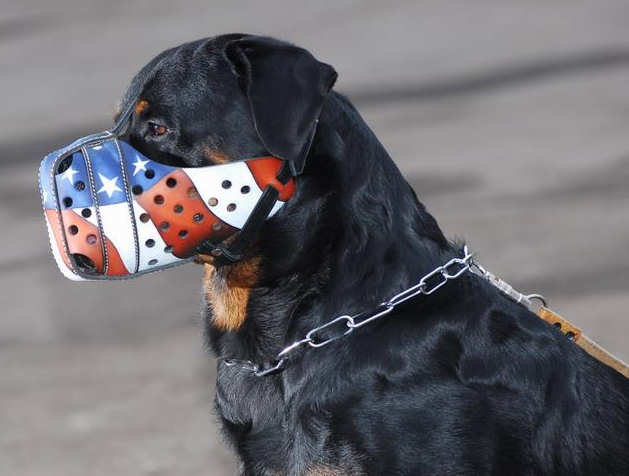 Hand painted by our artists leather Muzzle