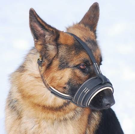 Royal Nappa PADDED Leather Dog Muzzle -CUSTOM MUZZLE M88