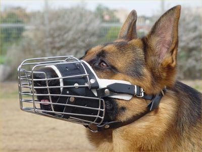 Full Padded Wire Basket Dog Muzzle on German Shepherd