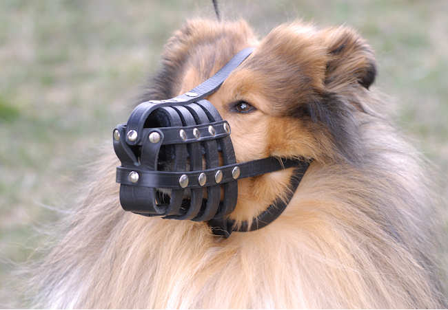Dog Muzzle Stress Free For Collie