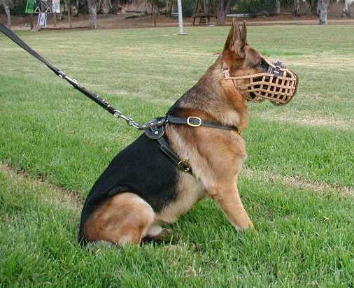 leather basket dog muzzle for German Shepherd or working dogs