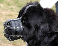 Dog Muzzle Stress Free For Newfoundland