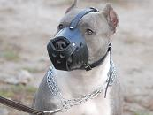 New Zealand Leather Dog Muzzle For PitBull