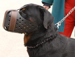 best leather dog muzzle for Rottweiler